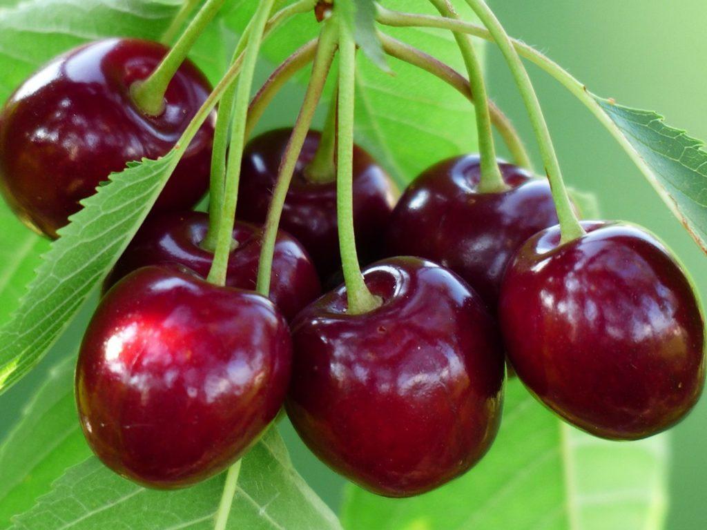 В июле запатентуют первую украинскую ягоду