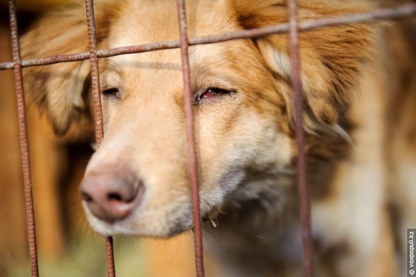 В Украине с начала года зафиксировано более 200 случаев жестокого обращения с животными