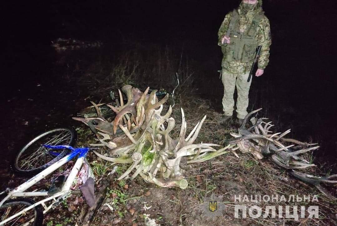 Сталкеры пытались вывезти из Чернобыльской зоны рога диких животных