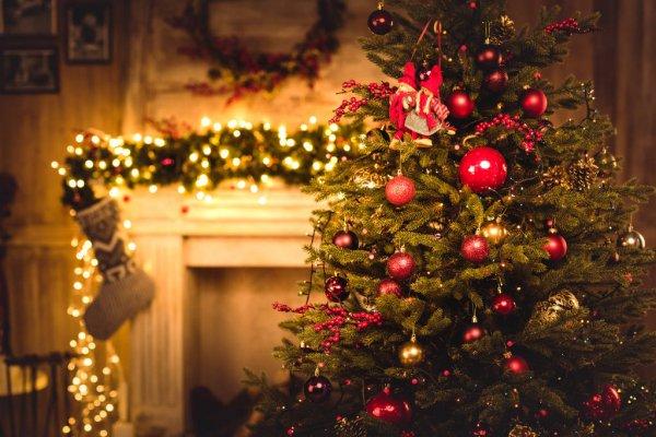 В Киеве открыты места приема новогодних деревьев. Адреса