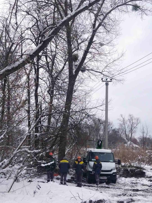 Бобры оставили без света село под Киевом