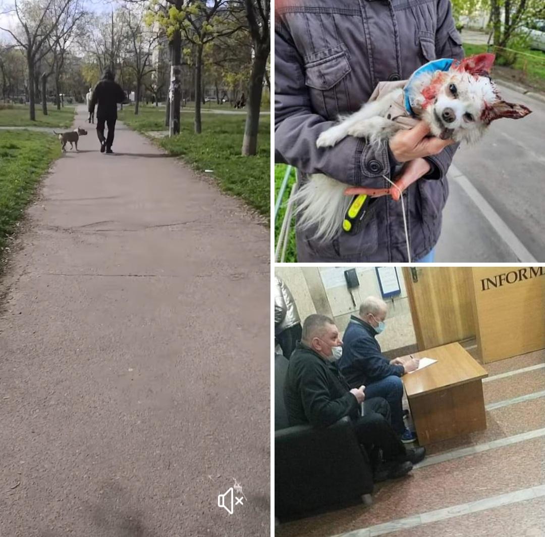 В Киеве стафф без намордника загрыз собаку
