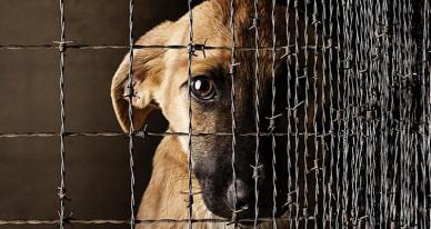 В Украине приняли закон о защите животных