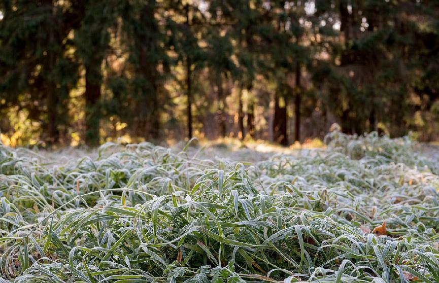Укргидрометцентр предупредил о первых заморозках